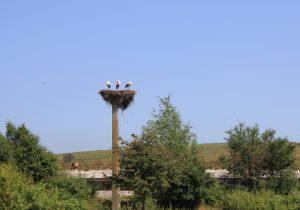 stork nest viewed from the motorhome window